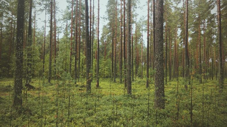 森林、色の置き換え前