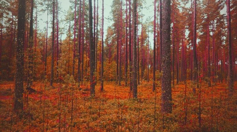 森林、色の置き換え後